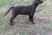 New Puppy Wabo
