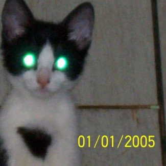R.I.P. Cooter Wissert - [2006-2012] My little boy, Miss him so much!