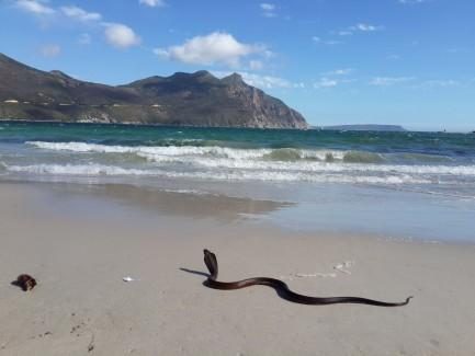 12th Annual Baja South Cobra Hunt.  Cerritos Beach, B.C.S. Mexico