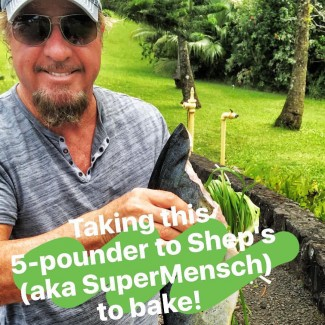 Mahi Mahi Instagram Story: Saltbaking with Shep Gordon & Questlove