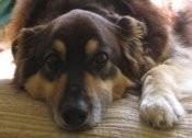 clifforddog1's picture
